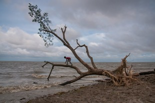 A child is climbing a tree uprooted by storm.
