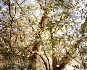 Garden of Eden© Marius Schultz