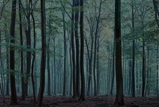 #0172 | 2009 © Michael Lange