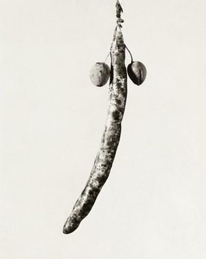 Herbarium series, Astrophytus dicotiledoneus, 1984, Selenium toned gelatin silver print, 40 x 30 cm © Joan Fontcuberta