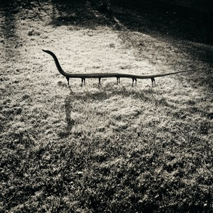 "From the photobook ""The Nature of Photography, The Photography of Nature"" © Joan Fontcuberta"