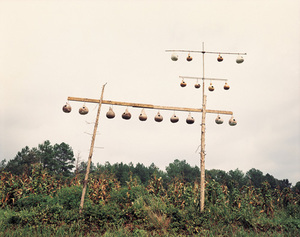 Gourd Tree, near Fayette, Alabama, 1988