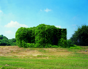 Kudzu Devouring Building, near Greensboro, Alabama, 2004