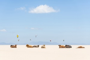 Cows And Kites. I was driving along the beach highway when I noticed the bulls sunbathing on the empty beach. I initially thought I was seeing things, but no it really was sunbathing cows!<br>Honorable Mention Places © Andrew Lever/National Geographic Photo Contest