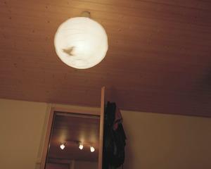 L'oiseau de ma lampe