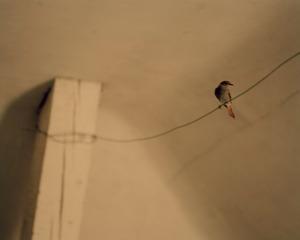 L'oiseau sur le fil