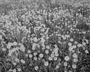 Un magnifique champ de fleurs