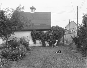 Mathew Brady in the Back Yard I, 1952; gelatin silver print; collection San Francisco Museum of Modern Art. Accessions Committee Fund purchase; © John Szarkowski (Plate # 12)
