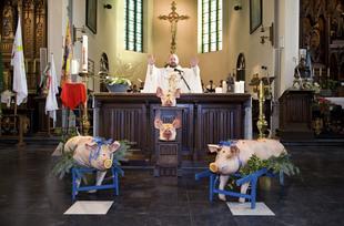 Celebration of Saint Anthony, Ingooigem © Nick Hannes