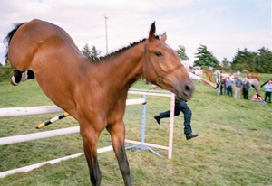 "Lunging Crosmolina, Agricultural Show. From the exhibition ""Landscapes"" © Tom Wood"