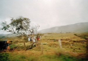 "May Day Bush. From the exhibition ""Landscapes"" © Tom Wood"