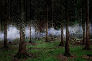 Between The Trees 1 © Ellie Davies