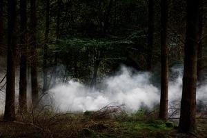 Between The Trees  10 © Ellie Davies