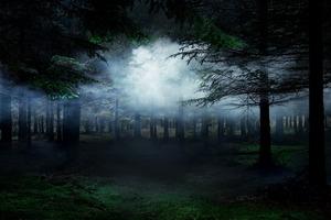 Between The Trees 4 © Ellie Davies