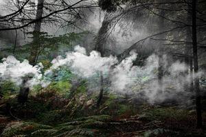 Between The Trees 5 © Ellie Davies