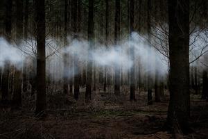 Between The Trees 6 © Ellie Davies