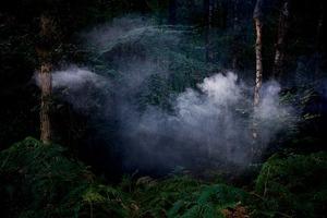 Between The Trees 7 © Ellie Davies
