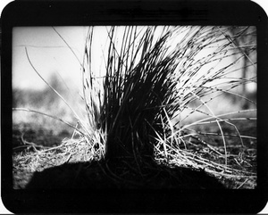 """""""Untitled"""" (Shadow #21), 2013"""