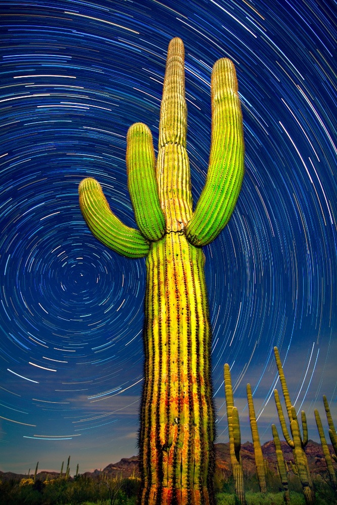 Organ Pipe Cactus National Monument, Arizona: a 75 minute time lapse of a giant saguaro and the northern sky.