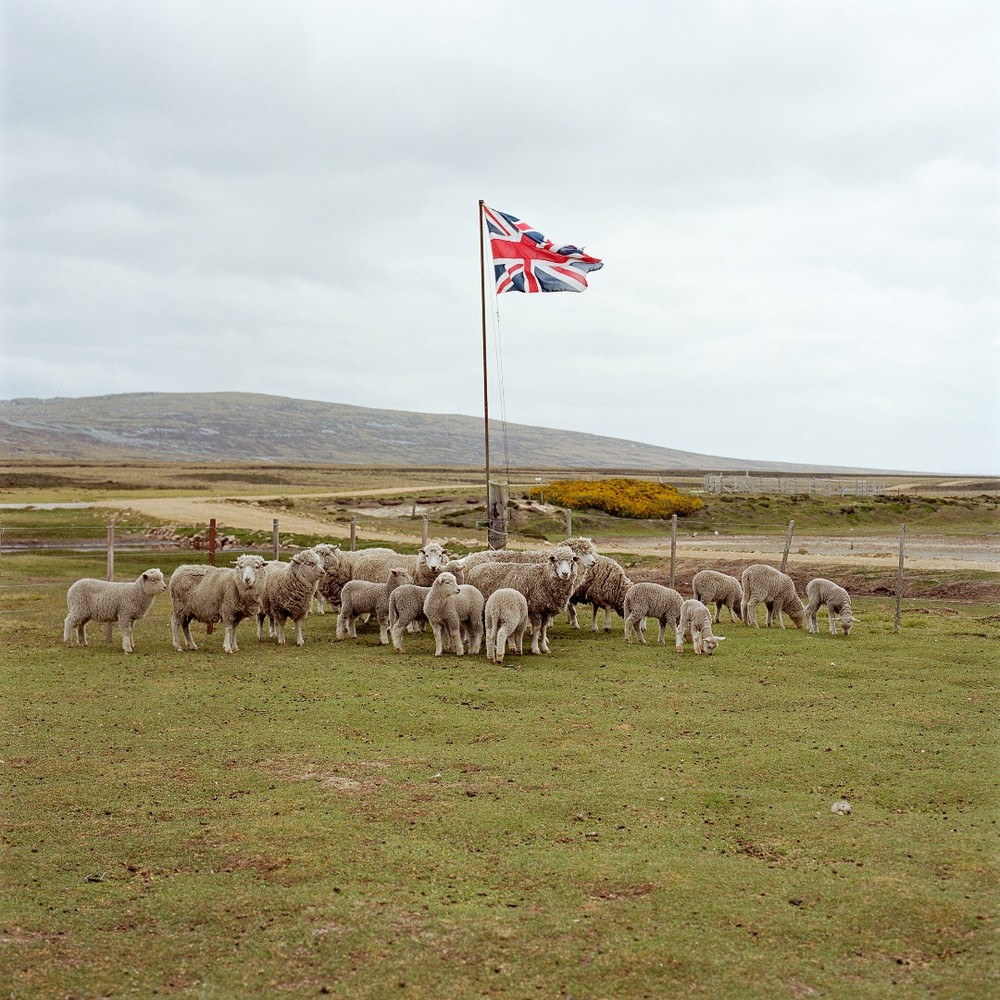 "The Falkland Islands are home to approximately 600,000 sheep. From the book ""Empire"" © Jon Tonks"