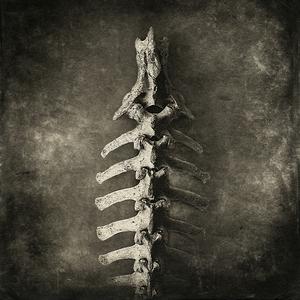 backbone© Gary