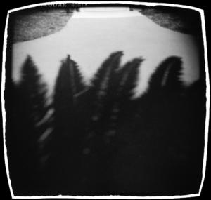 Palm Shadows, Golden Gate Park, San Francisco