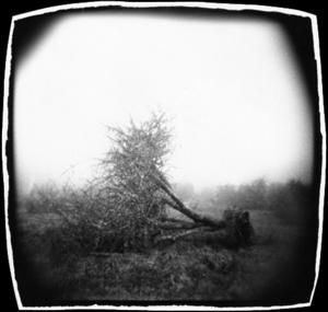 Wax Orchards Tree
