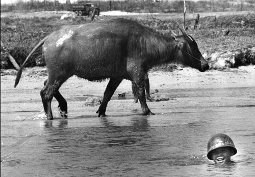 "Vietnam. Saigon. The Year of the Buffalo. 1973. From the book ""War Photographer: Between Shadow and Light"" © Christine Spengler"