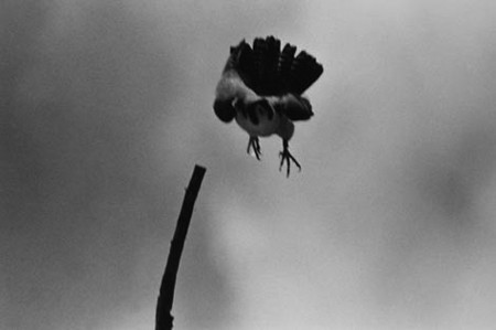The Attack, 1991, © Sylvia Plachy