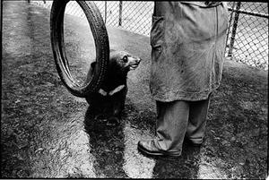 Overbearing man, Budapest, 1964, © Sylvia Plachy