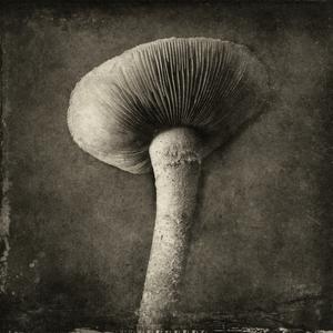 fungus© Gary
