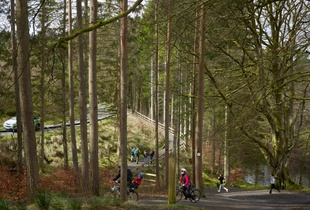 Kielder Forest Park, Kielder, Northumberland, April 11, 2014. Courtesy Flowers Gallery.