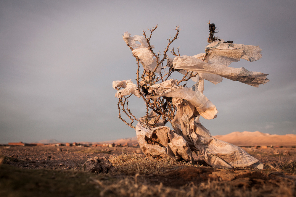 Plastic tree #49. 3rd Place, Fine Art Series, LensCulture Earth Awards 2015.