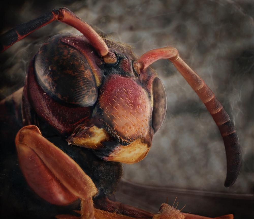 Back Porch Screen Door, August 23rd (Brown and Black Paper Wasp). Finalist, LensCulture Earth Awards 2015.