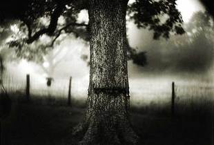 "Untitled (#1, #30, and #34),"" 1998. From the ""Deep South"" series. Tea-toned gelatin silver print; 38 x 48 inches. © Sally Mann"