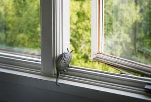 Domestic Armadillo © Doris Mitsch