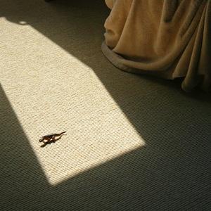 Domestic Komodo Dragon © Doris Mitsch