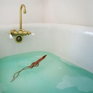 Domestic Kraken © Doris Mitsch