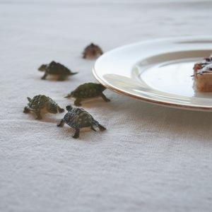 Domestic Turtles © Doris Mitsch