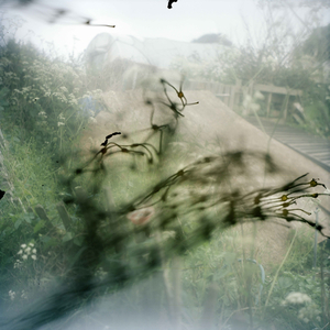 © Stephen Gill, from the series Outside In, commissioned for the Brighton Photo Biennial 2010