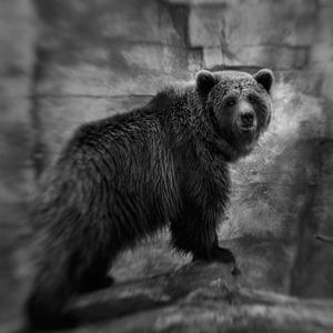 Os Bru © Anne Berry