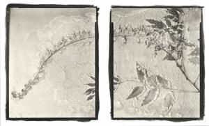 Botanical Specimen with Salt (Unidentified No. 4) © Claire A. Warden