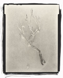 Botanical Specimen with Salt (Branch No.  2) © Claire A. Warden