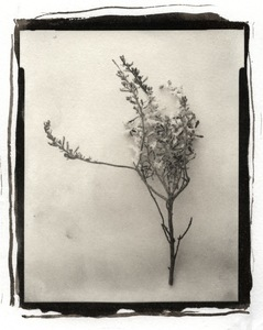 Botanical Specimen with Salt (Branch No. 1) © Claire A. Warden