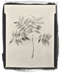 Botanical Specimen with Salt (Unidentified No. 2)© Claire A. Warden