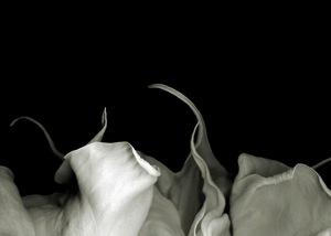 Datura G © Doris Mitsch