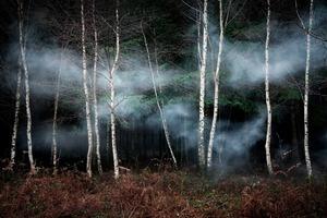 Between The Trees 2 © Ellie Davies