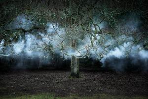 Between The Trees  11 © Ellie Davies