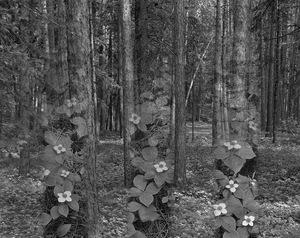 Forest Ontario                                                   © Karen Strom