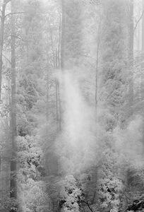 Forest, Great Smokies                                    © Karen Strom